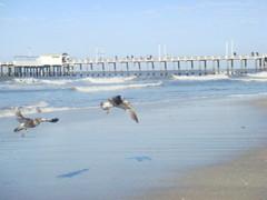gaviotas (maybe tomorrow_) Tags: beach playa gaviotas