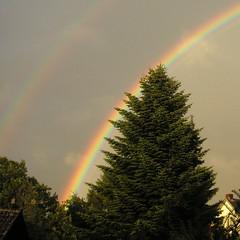 Regenbogen (jens kuu) Tags: tree rainbow baum regenbogen fichte tanne frmern oder sogar2