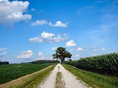 Hoosier Landscape - by cindy47452