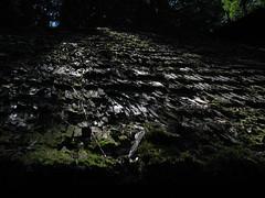 Bran Castle (Dracula's Castle) (bortescristian) Tags: flowers trees windows flower tree verde green castle nature lamp beautiful architecture canon design is post interior natura dracula powershot romania s3 cristian castillo castel forts 2007 bran fortresses roumanie flori copac copaci frumos arhitectura ziduri floare bortes pereti lampadar bortescristian cristianbortes ferestrewalls