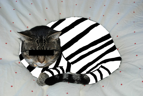 criminal cat images
