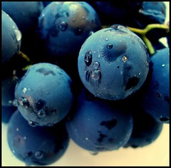 Taste it (sevgi_durmaz) Tags: nature taste grape soe blackgrape blueribbonwinner flickrsbest abigfave shieldofexcellence platinumphoto wowiekazowie superhearts amazingamateur platinumheartaward thebestpool