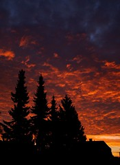 Look outside my window (Kirsten M Lentoft) Tags: trees sky sunrise fire silhouettes glostrup supershot momse2600 diamondclassphotographer frhwofavs theunforgettablepictures kirstenmlentoft