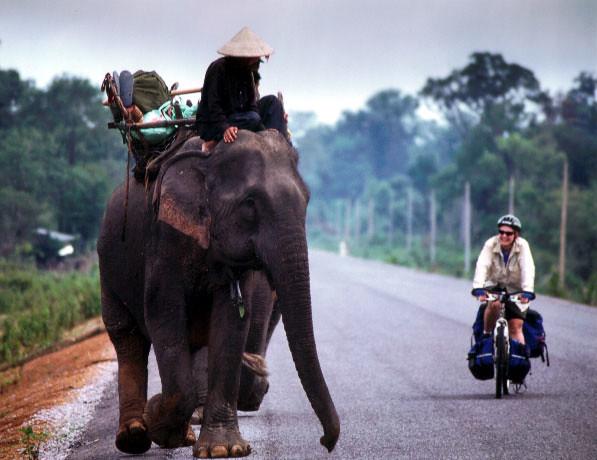elephant_laos