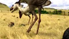 03 4 terror birds