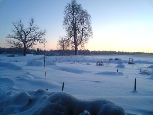 Sniegynas