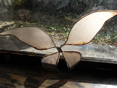 Lily's pixie wings