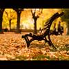 [Autunno] in Passeggiata (Un ragazzo chiamato Bi) Tags: autumn leaves foglie pen bench 50mm f14 olympus om leafes autunno zuiko ep1 terni panchina 43adapter giardinipubblici lapasseggiata primaopoprendolaresidenzainpasseggiata