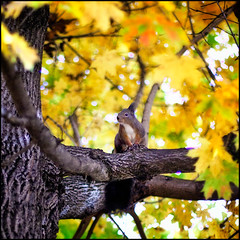 autumn squirrel (andreas gessl) Tags: vienna wien autumn tree colors leaves animal austria squirrel focus branch dof bokeh tier schoenbrunn eichktzchen bokehhearts