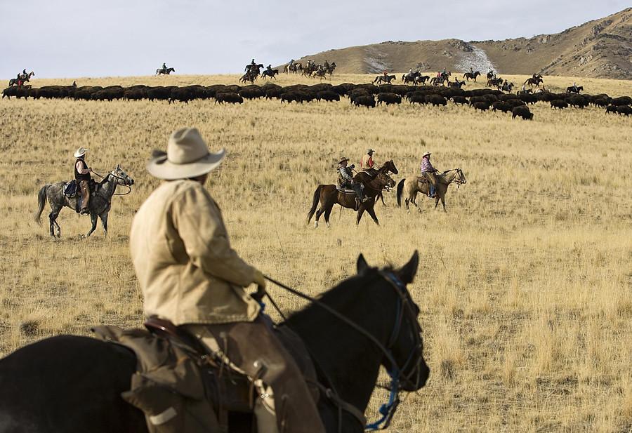 bison roundup dg 4563