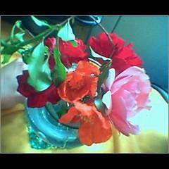 2007.04.16 (ismaela) Tags: flowers roses april2007