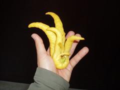 Bhuddas Hand Citron 2