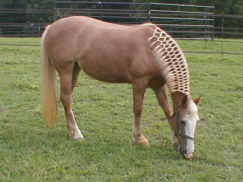 Ugg someone want to teach me how to braid? | EquiFriends