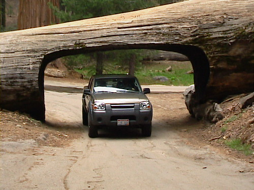 A car pussing through Tunnel Log at Sequoia National Park, California