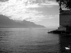 Lac Leman (dr3wie) Tags: sky bw cloud mountains water switzerland swan suisse valais rowers montreux lacleman chateauchillon