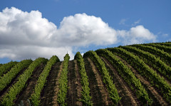 Going over the Hill (walla2chick) Tags: usa clouds washington vineyard hill rows washingtonstate coolest soe wallawalla 1846 naturesfinest mywinners anawesomeshot cted08lic