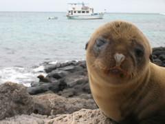 Galapagos Islands Photo