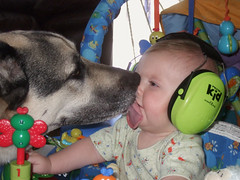 Maggie and Chase (Carrie Taylor) Tags: dog dogs freeassociation kid interestingness kiss priceless maggie chase germanshepherd notmyphoto carrietaylor mybestfriendskid andherotherkidthefurryone interestingness7170712