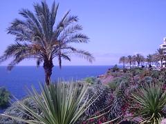 Sea everywhere (lavender.) Tags: blue trees sea plants gardens palmtrees atlanticocean magicgardens madeiraisland
