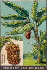 pl tropic 1