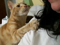 What I have to put up with! (Chris C. Crowley) Tags: pet cat orangecat priceless oneofakind catscatscats squeegee pawing americaamerica catantics photosthatwereawwwedover theexploremachine