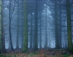 Drive past trees (algo) Tags: wood trees england mist misty fog photography interestingness topf50 bravo topv1111 topv999 driveby explore algo topf100 100f chilternforest 50f 25faves 200750plusfaves explore62 goldenphotographer