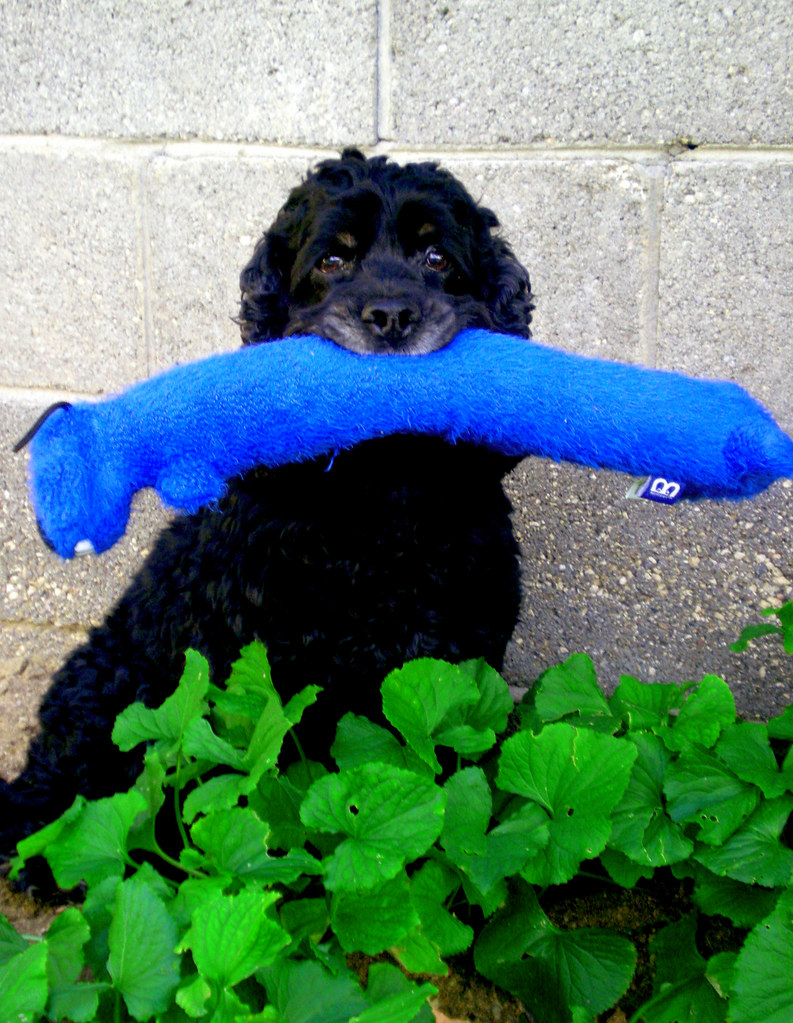 The World's Best Photos of blue and petsmart - Flickr Hive Mind