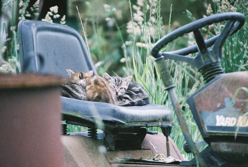 Tractor Kittens