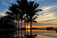 Palm Trees at Sunset In Maui (Curtis Gregory Perry) Tags: maui sunset palm tree reflection cloud sky nikon d300  strom pem tr crann baum puu      aa pohon   rbol   arbo drzewo arbre tr rvore boom copac    trd pokok drvo