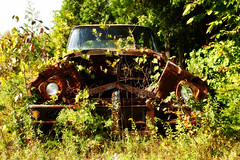peek-a-boo (mlephotos) Tags: canada overgrown truck amazing rust rusty junkyard hiden rustyoldtruck hggt mcleansautowreckers