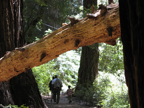 On the Sequoia Trail