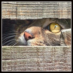 Got My Eye On You!! (adrians_art) Tags: light cats pets tag3 taggedout dark fur geotagged fun eyes furry bravo funny tag2 tag1 shadows humour whiskers textures felines amusing naturesfinest geotags cc800 abigfave ultimateshot diamondclassphotographer superhearts