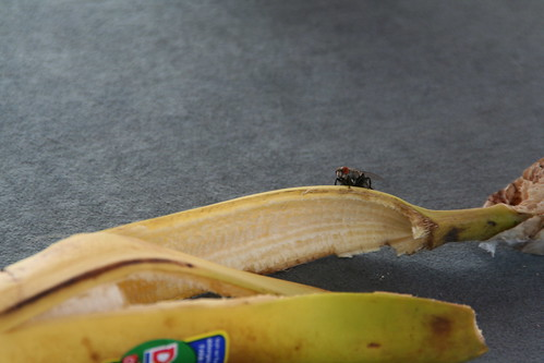 Banana with fly