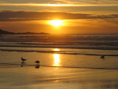 Seagulls In Surf (easyrew) Tags: sunset seagulls beach gold cornwall stives 2007 porthmeor catchycolourorange mkcamp catchycolouryellow mkcamp2007 catchycolourgold