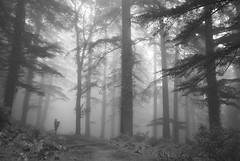 Solitary (Shubh M Singh) Tags: trees woman india mist church monochrome graveyard rain mystery nikon alone dusk refugee crosses monk buddhism tibet monks lama tibetan d200 solitary dharamshala shubh mcleodganj kangra rse himalyas mcleodgunj nikonstunninggallery tibetanrefugees forsythganj