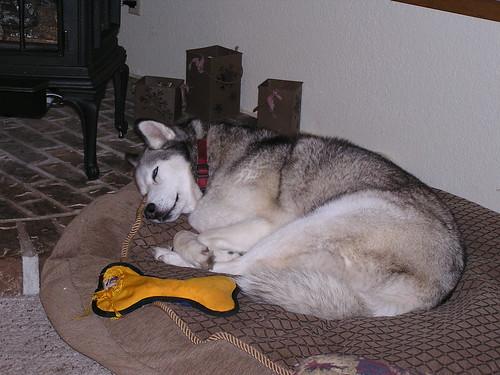 Sleepy Quinn
