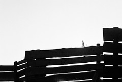 (...storrao...) Tags: park sunset pordosol blackandwhite bw film portugal 35mm noiretblanc olympus porto gaivota matosinhos parquedacidade penft olympuspenft onfilm convertedtobw storrao sofiatorro