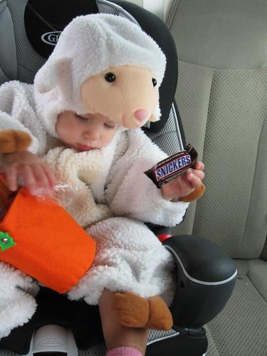 Z's a Little Lamb