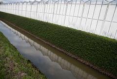 Standing in Line (nokkie1) Tags: white holland reflection green water glass grass lines contrast greenhouse nieuwveen