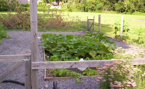Garden Squashes
