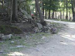 Parc Omega 066 (the_skipster) Tags: parcomega