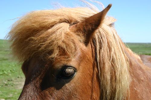 Ginger Pony