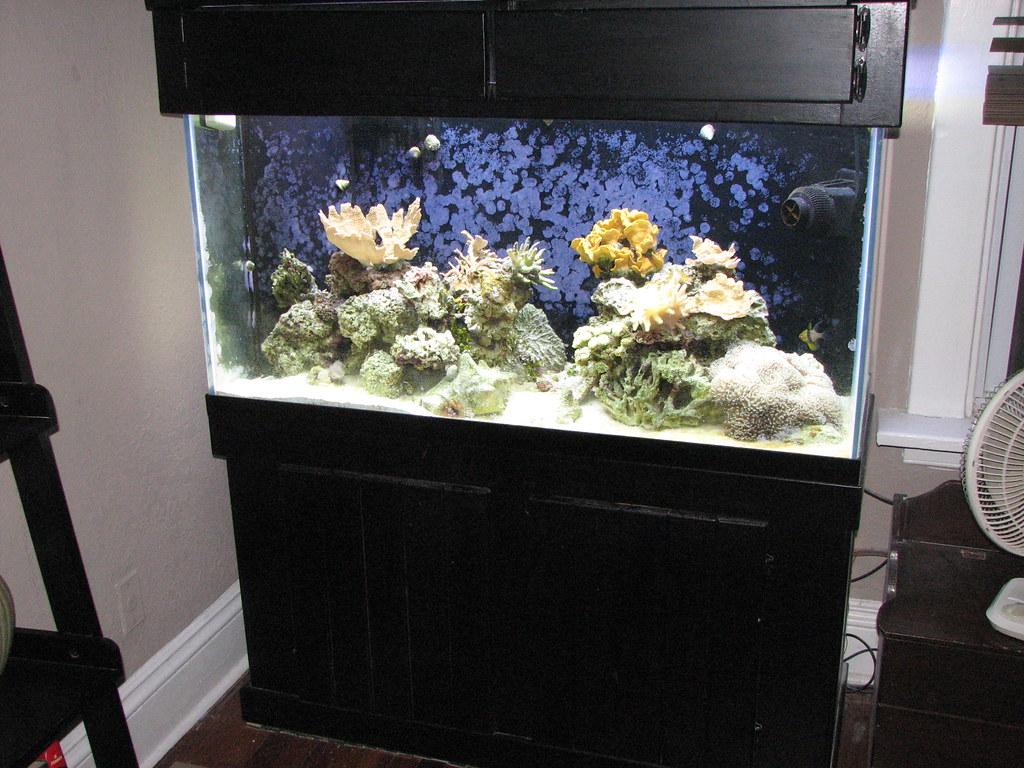 Reef 90G Oct 07 030