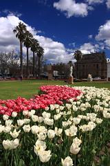Bendigo Conservatory Gardens (kth517) Tags: tulips australia victoria     bendigoconservatorygardens