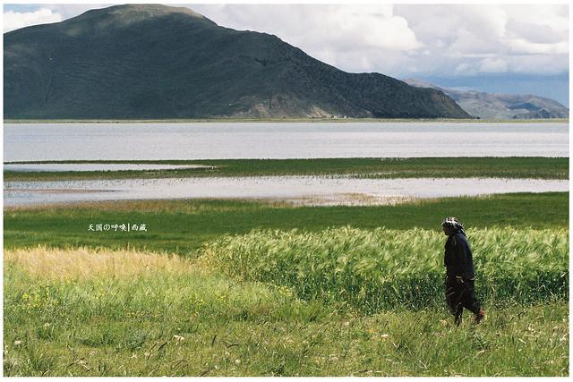 Tibet Outskirt 西藏郊区