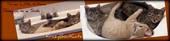 Three Little Kittens Sleepin in a Sink (KrazyBoutCats) Tags: cats pets animals kittens felines