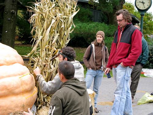Giant Pumpkin Seed Harvesting