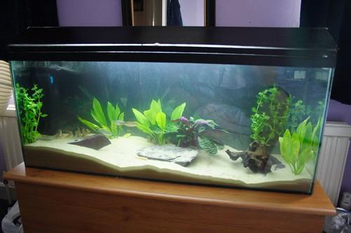 how to kickstart fish tank cycle