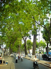 Tree-lined boulevard