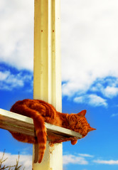 Cat Sunbathing in Heaven (marcus_Z!) Tags: sleeping england sky clouds cat d50 nikon bath heaven nap marcus chinese sunbath f18 zhe sunbathing tang mothertobe   marcusz   velviagaussian